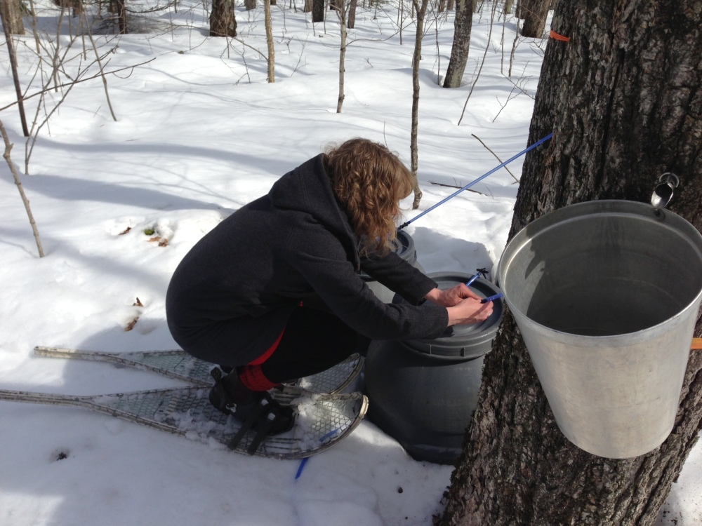 Checking sap in the barrel